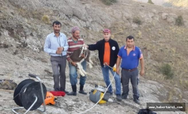 Kayanın Arasına Sıkışan Yavru Keçi 2 Saatlik Operasyonla Kurtarıldı!