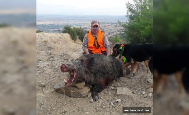Tarlasına zarar veren 200 kiloluk domuzu vurdu