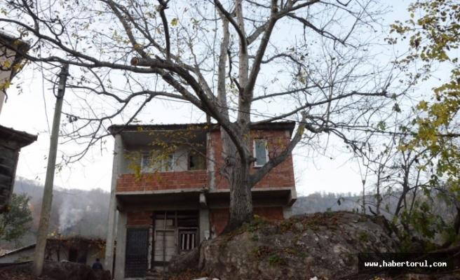 Dev kayada yetişen ceviz ağacı, görenleri şaşırtıyor