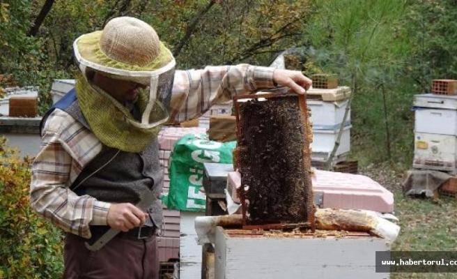 Arı ölümleri karşı klimalı kovanlarla azalacak