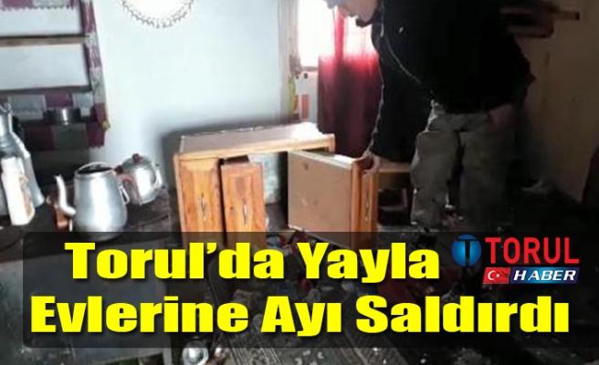 Torul'da Yayla Evlerine Ayı Saldırdı