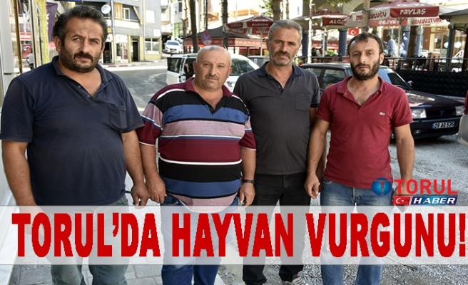 Torul'da Hayvan Vurgunu!