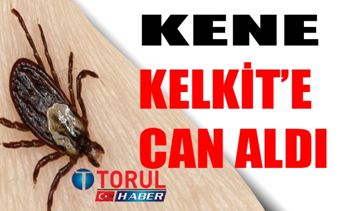 Kelkit'te Kene Can Aldı